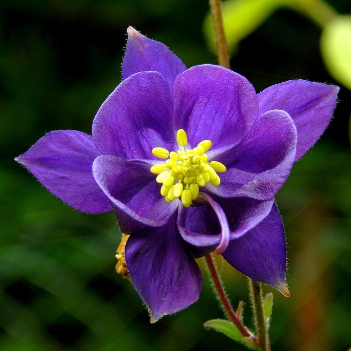 самые красивые цветы картинки - 10 самых необычных цветов мира Территория Фактов