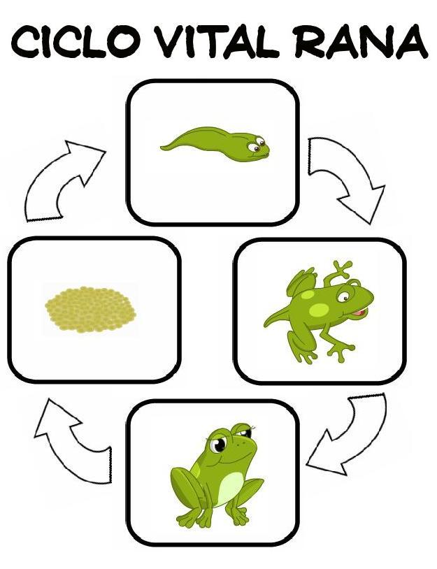 Imágenes a color listas para imprimir del Ciclo de Vida de la Rana y