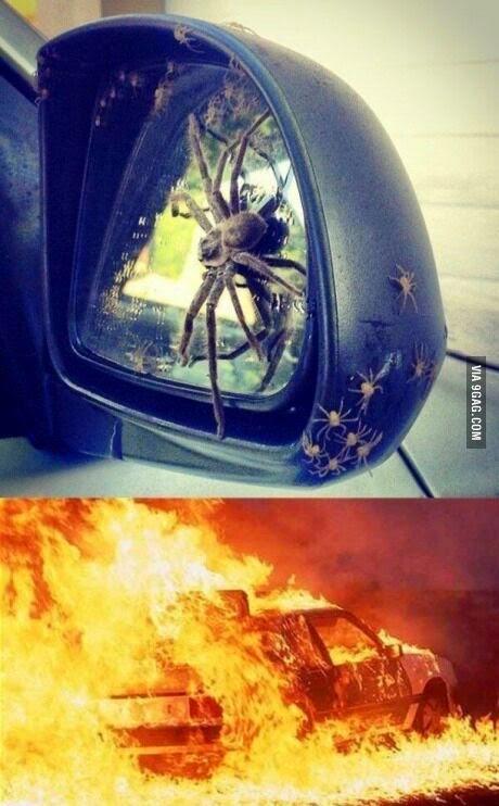 Tem uma aranha no meu carro