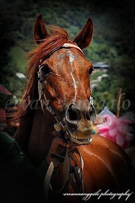 Pacu Kudo (Pacu Kuda) Padang Panjang