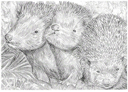 Three baby hedgehogs pic