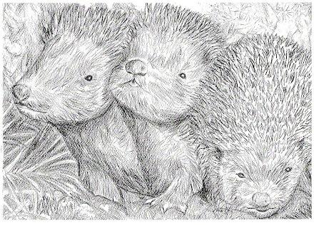 Three baby hedgehogs pic
