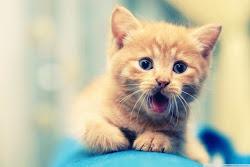 bud@k giler kucing