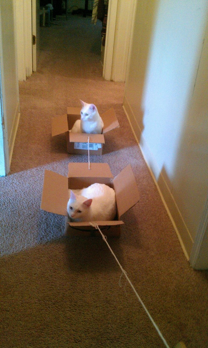 funny cat pictures, cats in boxes
