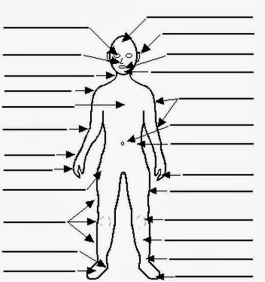 Blank Human Body Diagram For Kids Images