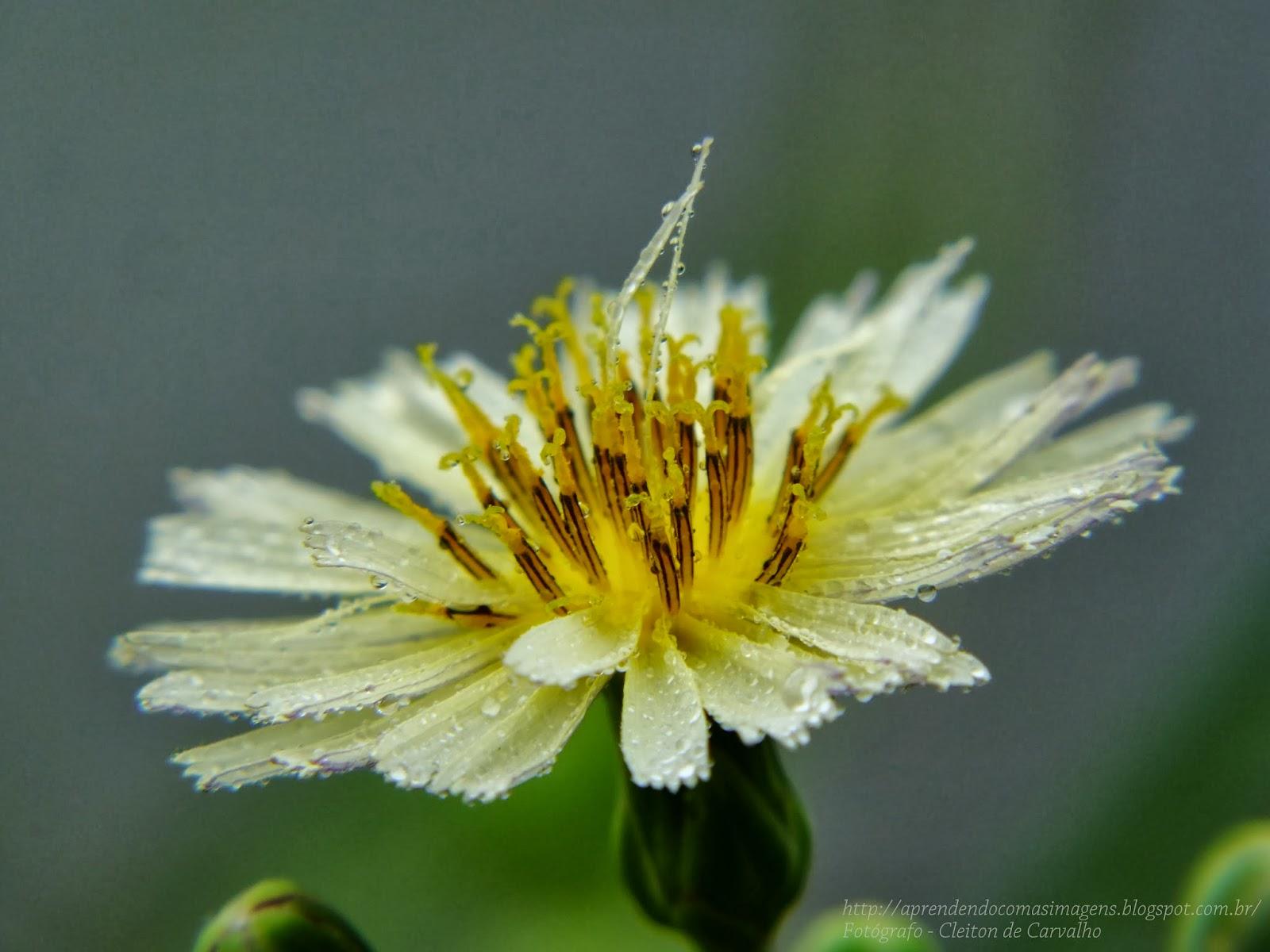 http://aprendendocomasimagens.blogspot.com/2013/09/minha-humilde-sede-de-viver.htmlTu me cuidas com carinho, mas não me admiras. Tu aprecias meu sabor e meu aroma, mas não me contemplas. Tu me eternizas quando em momento das flores, eu doo aos seus olhos, um simples florescer na minha humilde sede de viver...