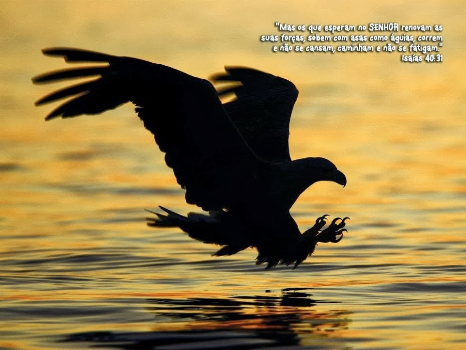 Mas os que esperam no SENHOR renovam as suas forças, sobem ...