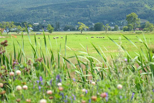 Champs et montagnes à Baie-Saint-Paul