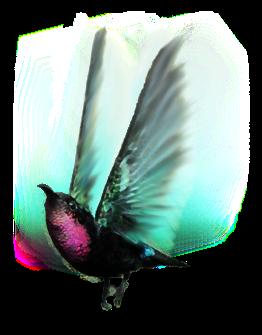 uccello-colibri