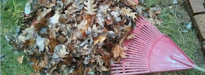 pile of leaves with rake