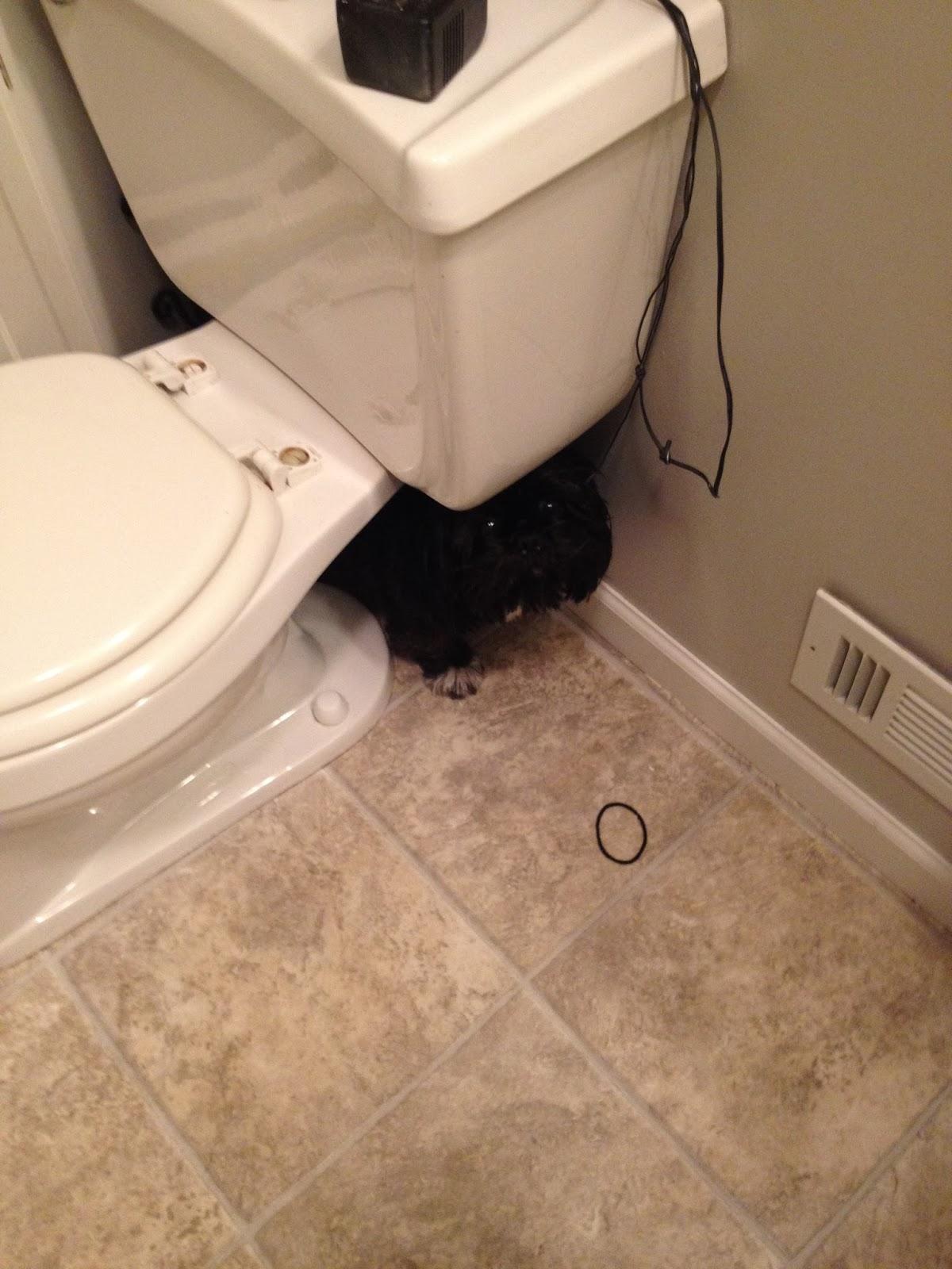 Beginning With Becca My Dog Hates Getting A Bath