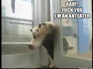 fuck you im an anteater
