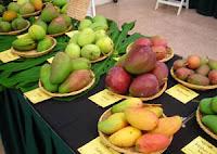 mango-fest, Kannur