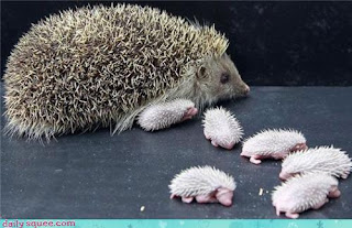 Mama & Baby Hedgies