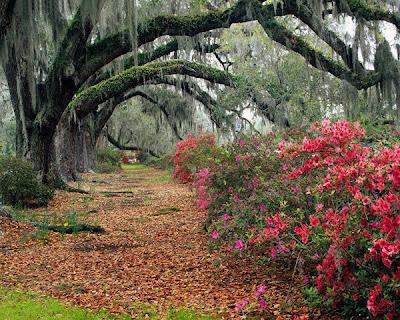 Paisajes Naturales Meditación y Bosques