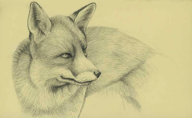fox - yara dutra
