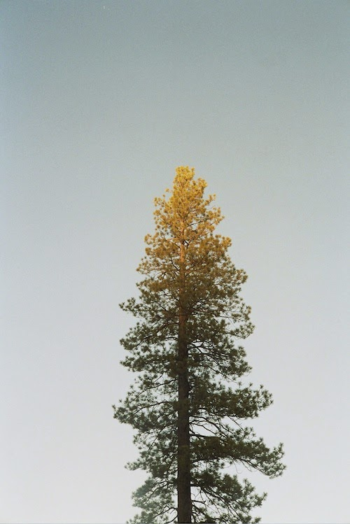 tree, lake tahoe, california