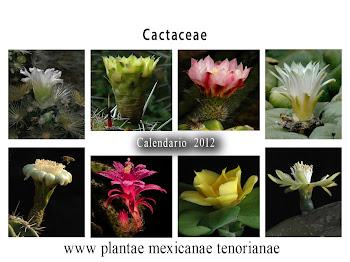 Calendario de Familias Botánicas, Cactaceae 2012