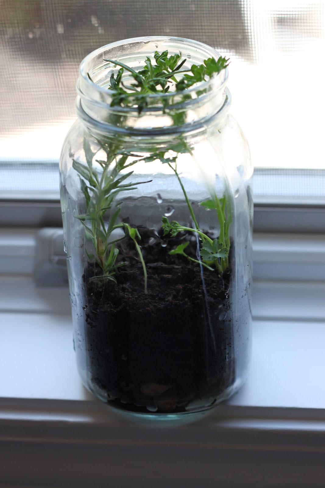 Goals Dreams With Deadlines Goal 4 Grow Herbs In A