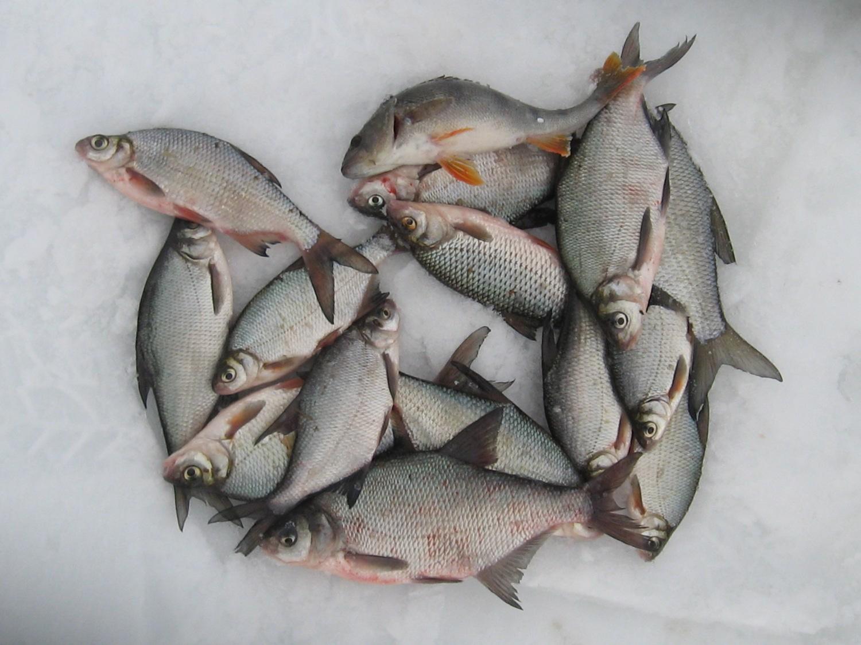 прикормка рыбы зимой