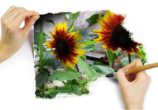 Słoneczniki jak malowane