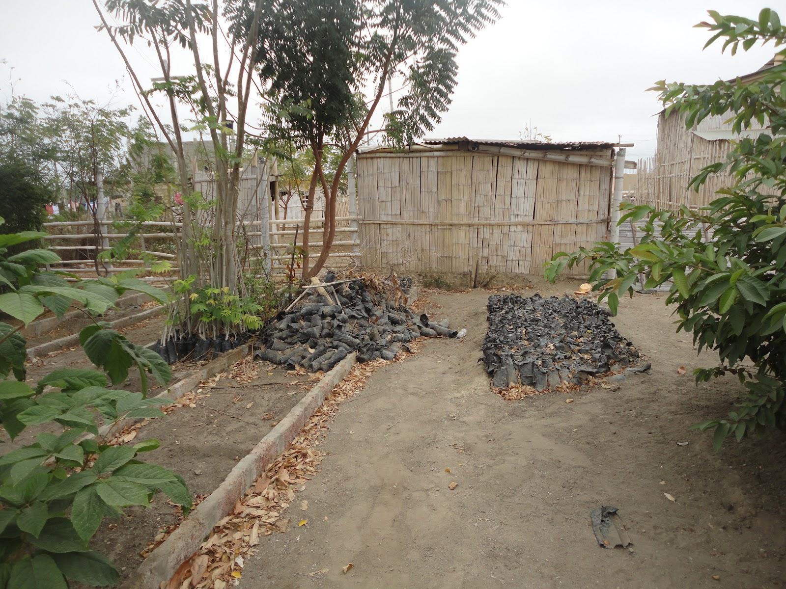 Vivero de plantas muertas comit barrial jard n bot nico for Vivero el botanico