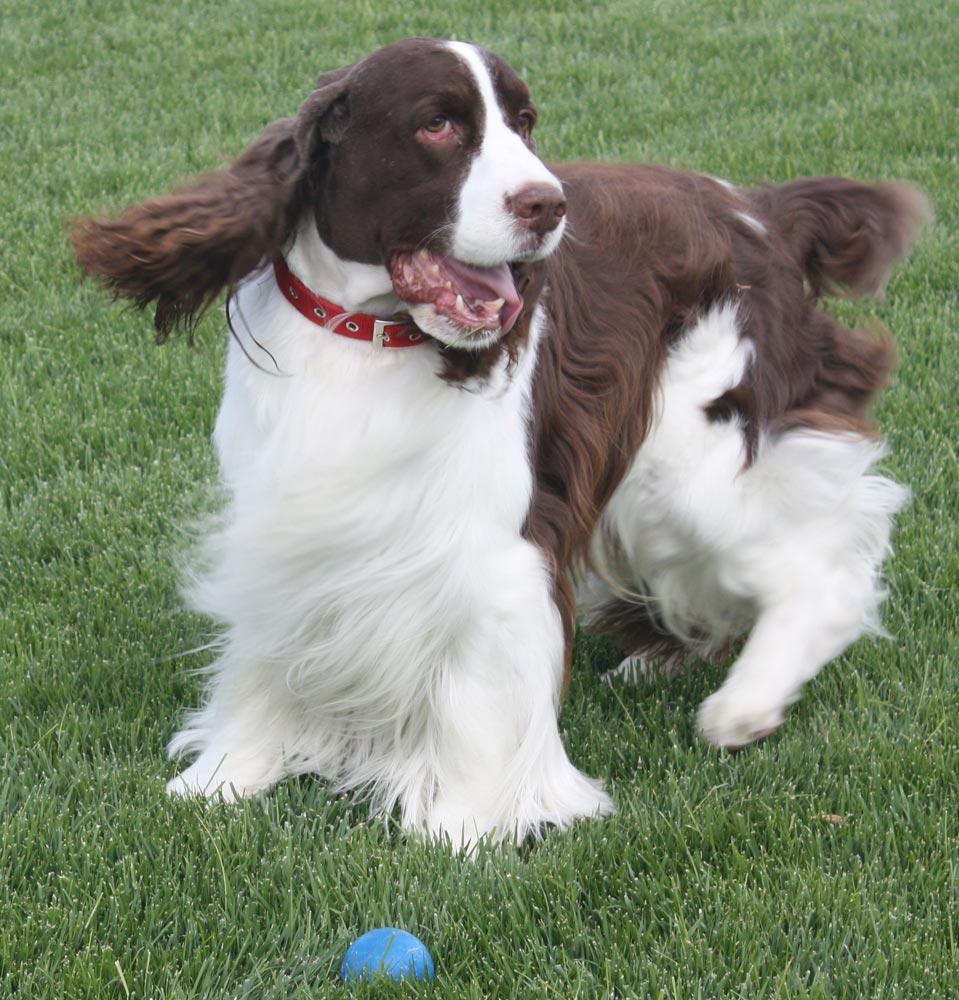 animal As Melhores Raças de Cães para Família