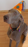 Kalen in his party hat