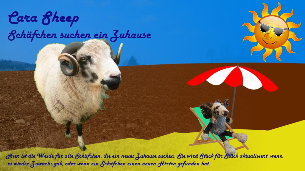 Cara Sheep - Schäfchen suchen ein Zuhause ♥