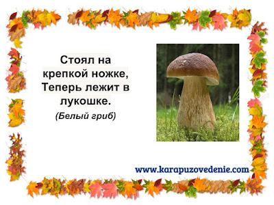 загадки про белые грибы для детей в картинках
