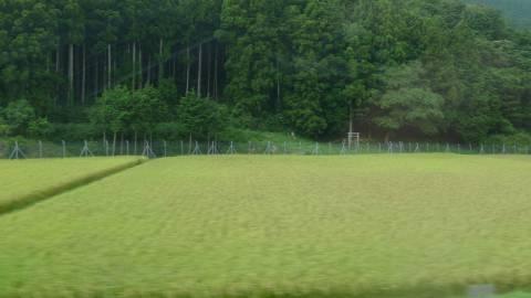 田んぼのフェンス