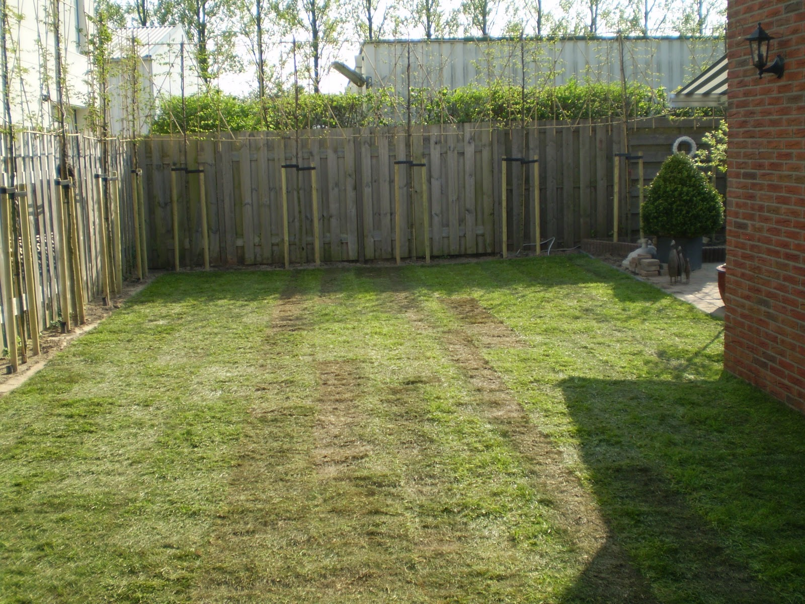 we tuinen haagbeuk ter afscherming van je tuin