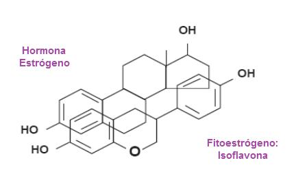 Similitud entre fitoestrógeno y estrógeno
