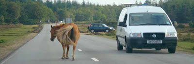 new forest ponies road accident prevention