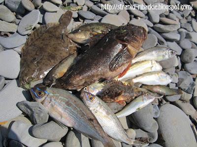 улов, морская рыбалка
