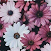 Fondos para chat de Whatsapp floral