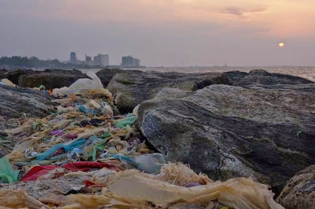 heartbreaking photos pollution