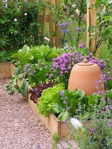 ревень, дизайн, использование ревеня в дизайне, рустикальный стиль и ревень, ревень в огороде, шнитт-лук, салат, латук