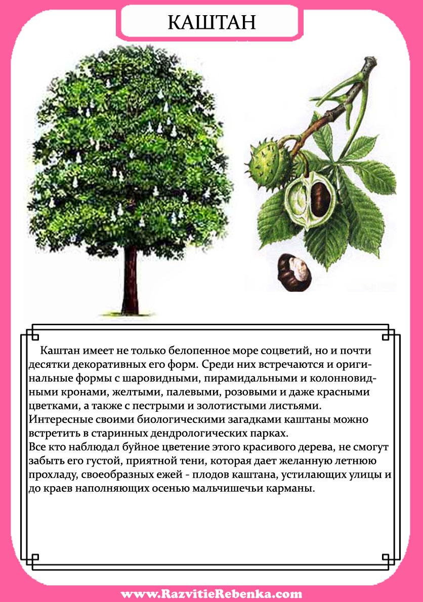 игра найди дерево по описанию характеристики согласия банка