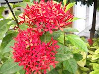 flower plant nursery