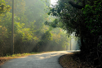 Beautiful road in Kerala