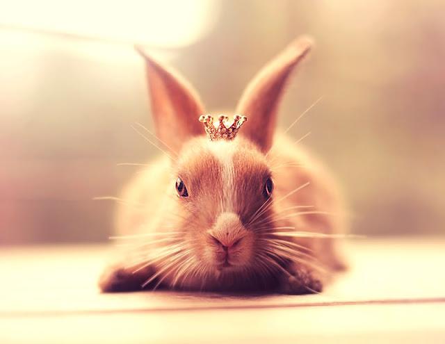 Fotógrafo realiza utiliza coelhos como modelos para criar fotografias mágicas