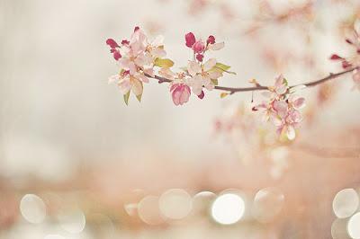 flor,natureza