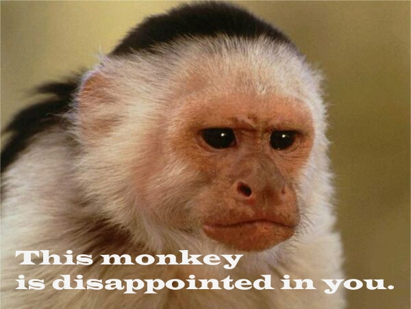 Disappointed monkey