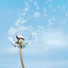 http://1.bp.blogspot.com/-J0KBALClWis/T6mQBK0BMjI/AAAAAAAAATk/SH0zsIEqJUY/s400/libertad-salud-libre-bienestar.jpg