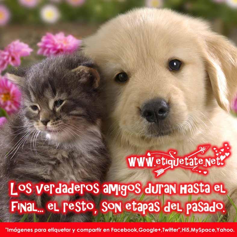 20 Imágenes de Amistad con Frases Lindas para compartir
