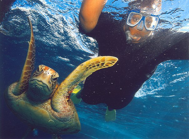 Snorkeling in Australia with a Sea turtle