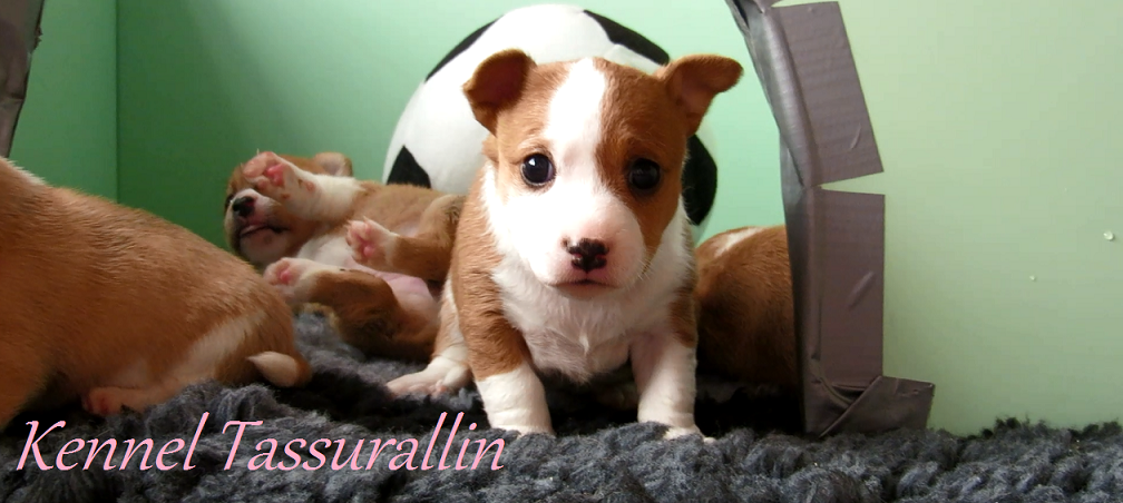 Tassurallin kennel