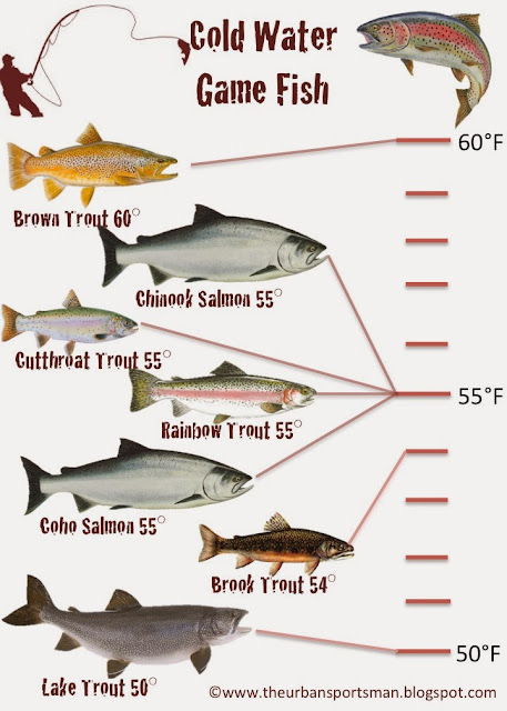 The urban sportsman understanding gamefish by temperature for What are cold water fish