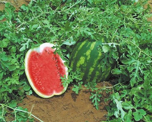 Watermelon A Natural Viagra